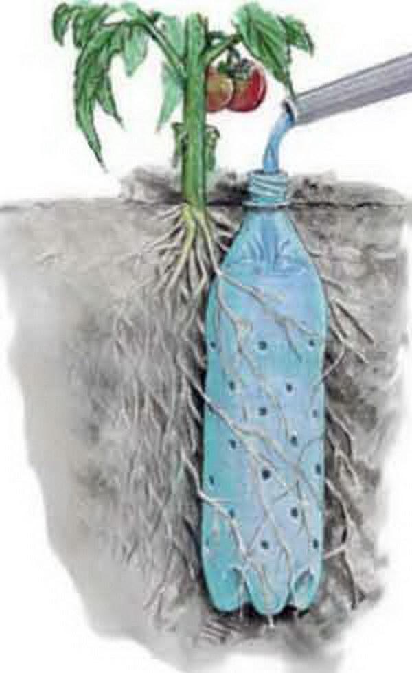 Soda Bottle Drip Feeder for Garden Plants.