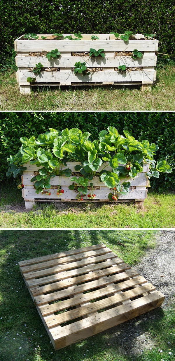 DIY Strawberry Pallet Planter.