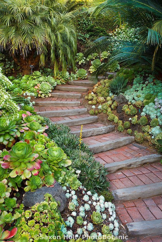 Steps Going Up Walkway into California Garden with Succulent Groundcover Mix.
