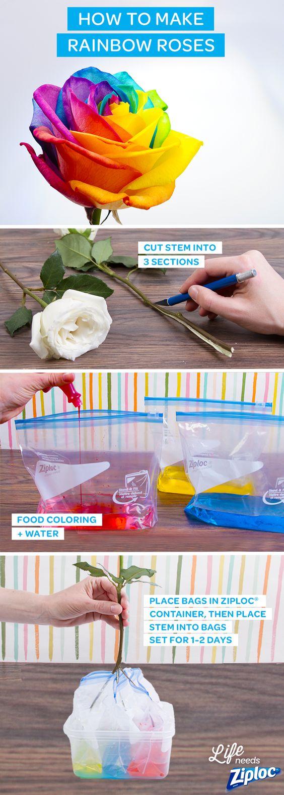 Super Easy DIY Rainbow Roses.