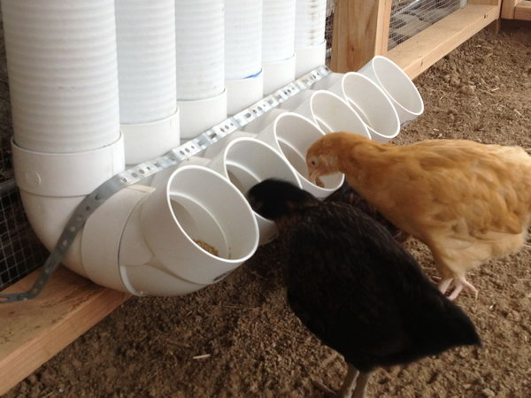 DIY PVC Pipe Chicken Feeder.