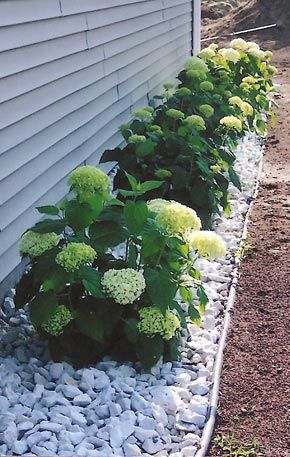 Create a White Gravel Garden on the Side of Your House.