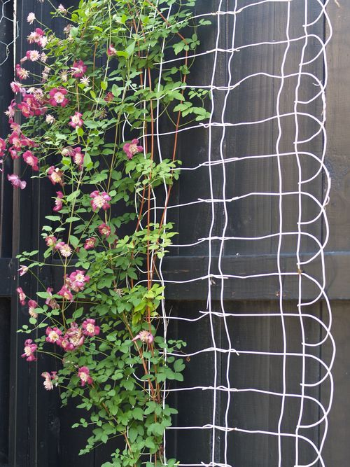 30 diy trellis ideas for your garden 2017 diy trellis using wire fencing solutioingenieria Images