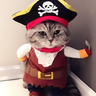 20+ Cat Costumes for Halloween