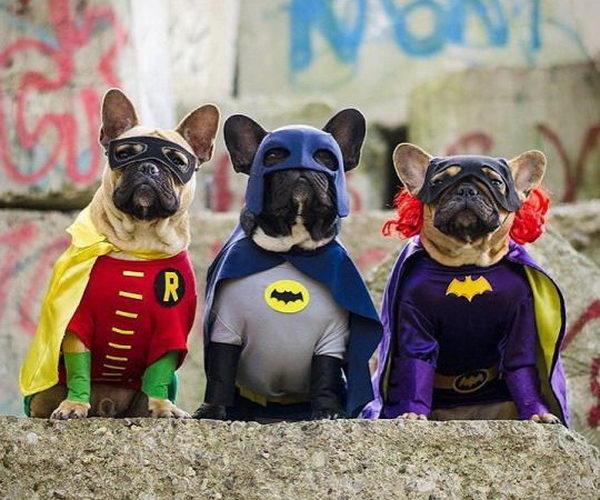 2 dog halloween costume diy ideas thumb