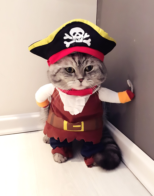 Cat Pirate Costume.