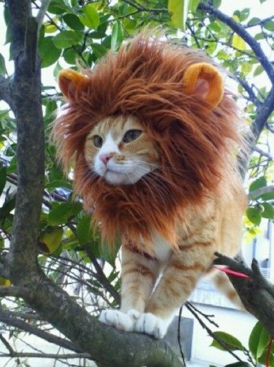 Lion Cat Costume.