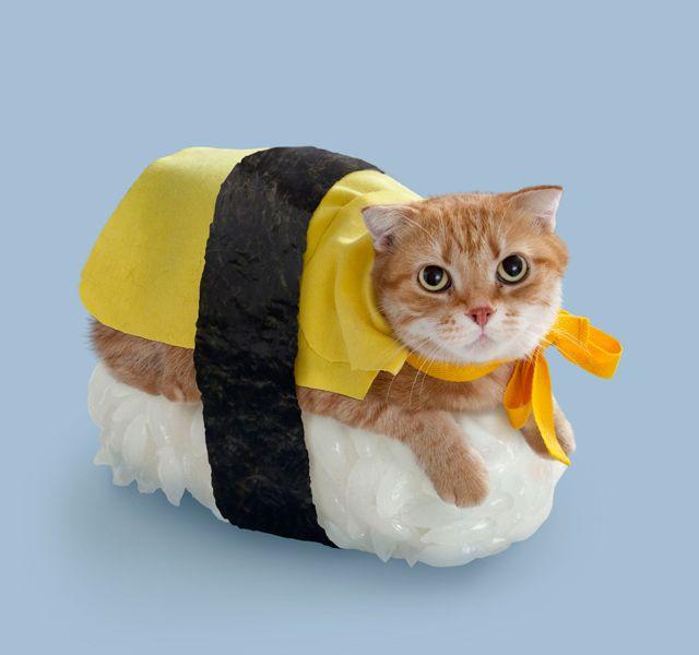 Sushi Cat Costume.