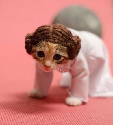 Princess Leia Cat Costume.