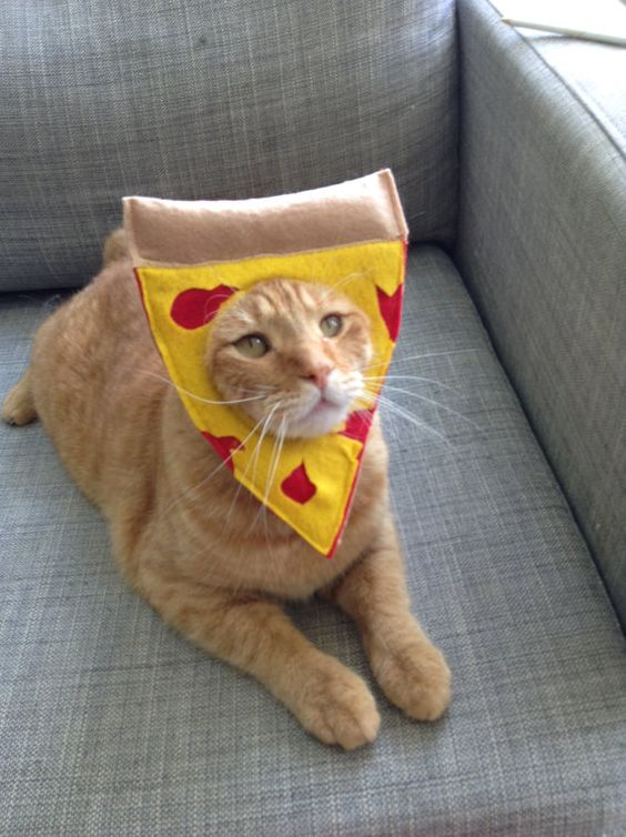 Pizza Cat Costume.