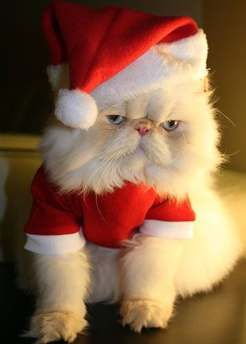 Santa Costume for Cats.