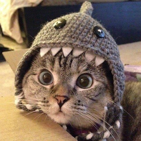 Shark Costume for Cats.