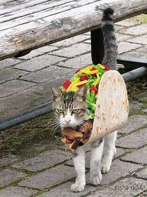 Taco Costume for Cat.