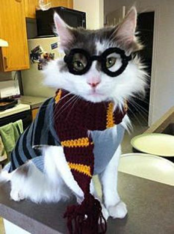 Harry Potter Cat Costume & 20+ Cat Costumes for Halloween 2017
