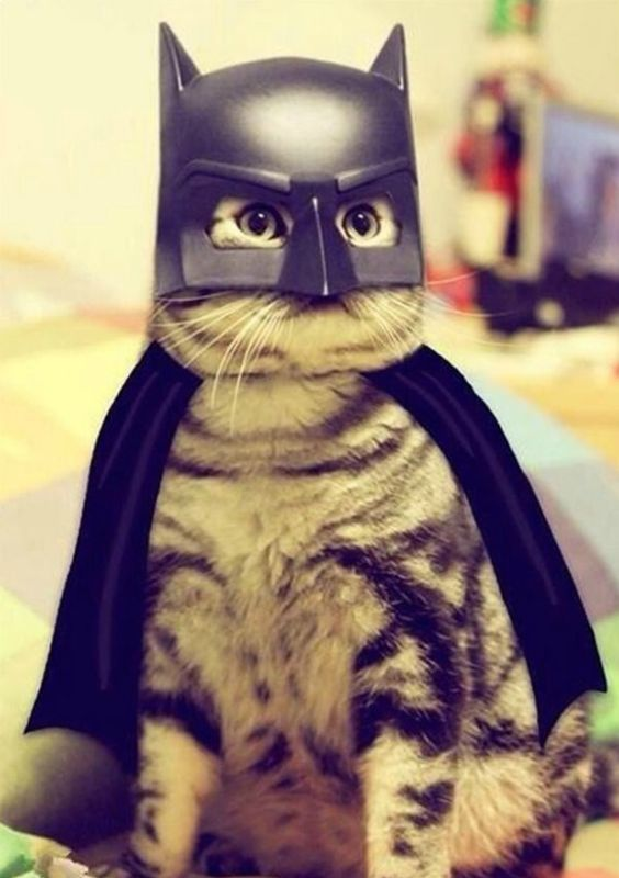 Cat Batman Costume.