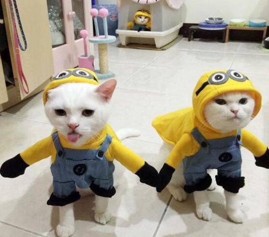 Minion Cat Costume.
