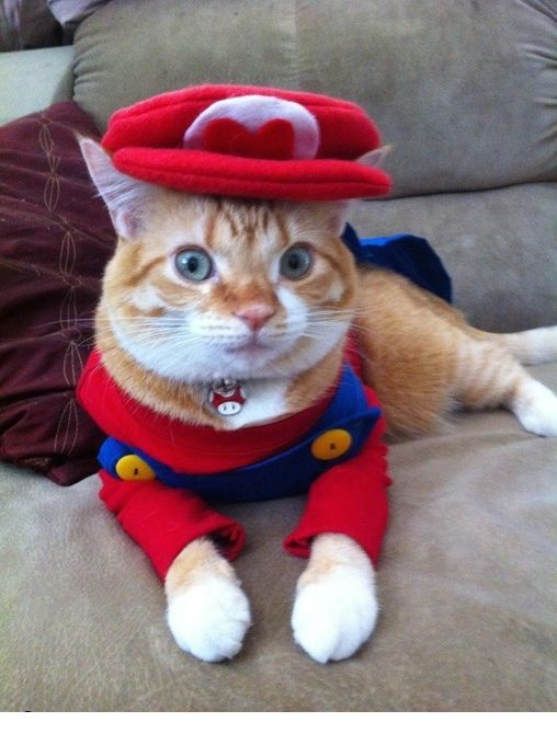 Super Mario Cat Costume.