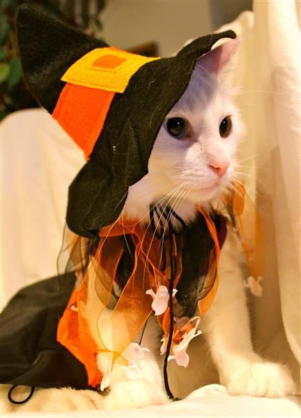 Cat Witch Costume.