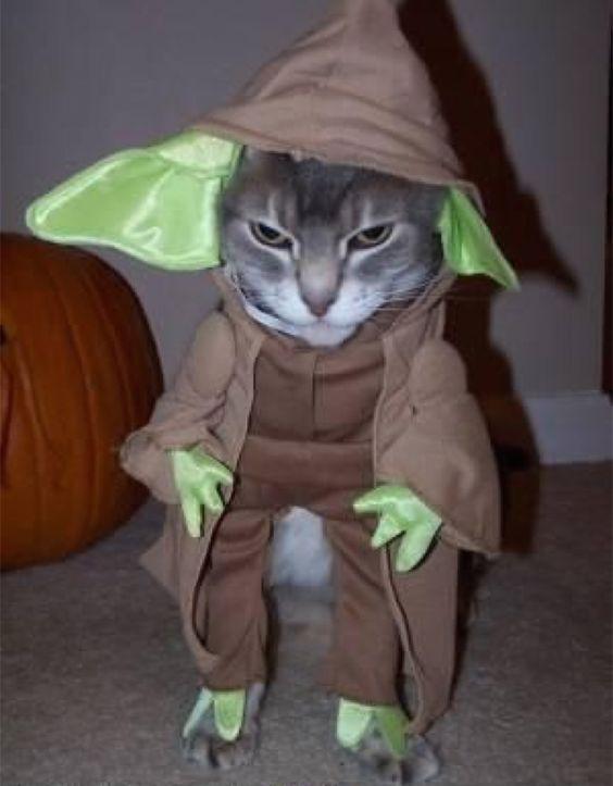 Cat Yoda Costume.