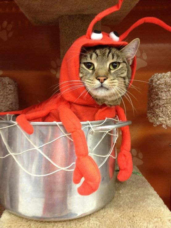 Cat Lobster Costume.