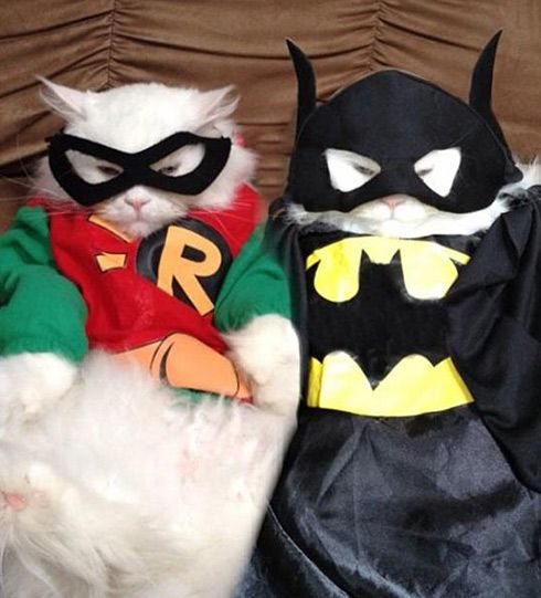 Batman and Robin Cat Costumes.