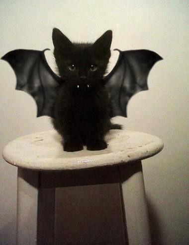 Cat Vampire Costume.