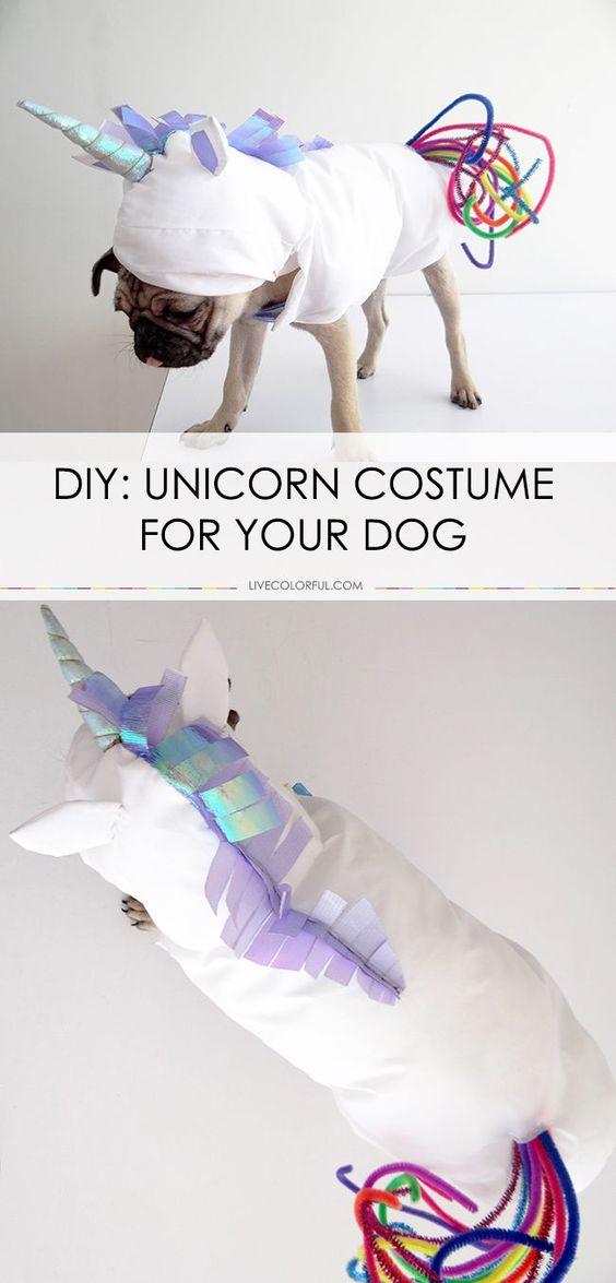 DIY Unicorn Dog Costume.