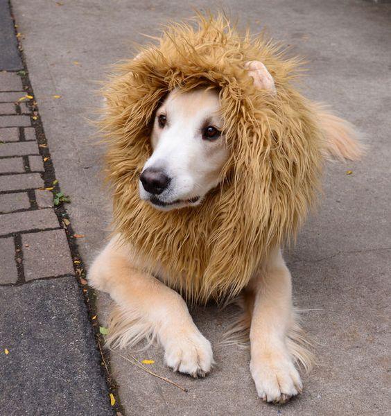 Lion Costume for Dog.