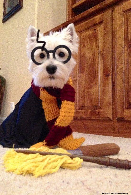 Harry Potter Dog Costume.