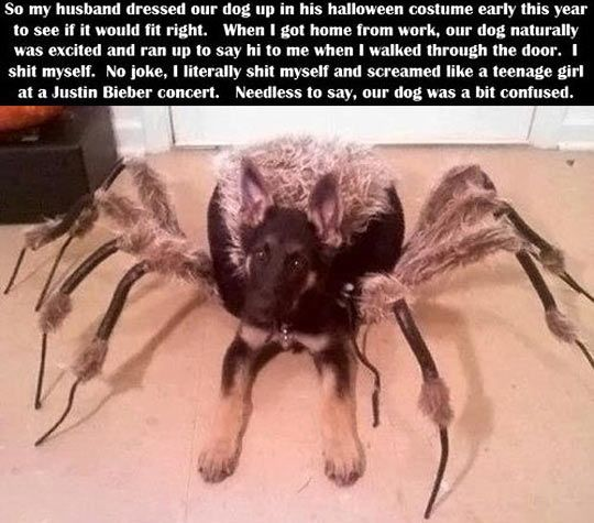 Spider Costume for Dog.