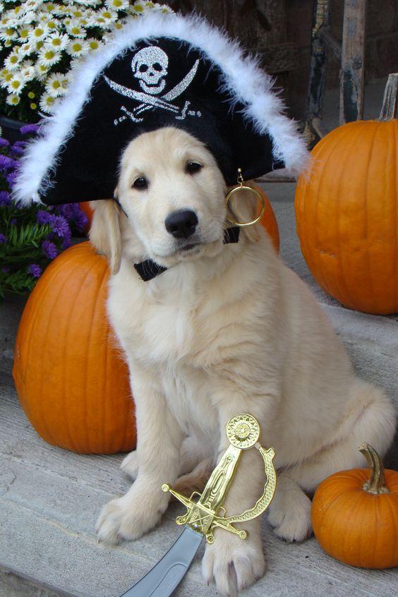 Dog Pirate Costume.