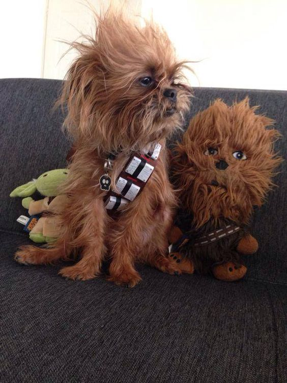 Chewbacca Dog Costume from Star Wars.