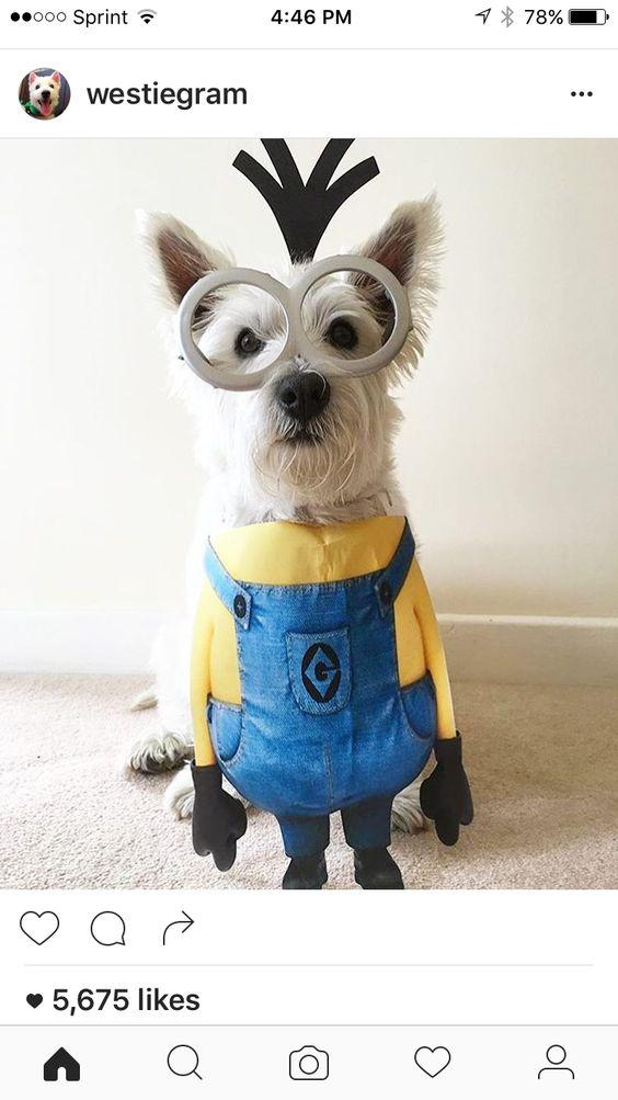 Minion Dog Costume.