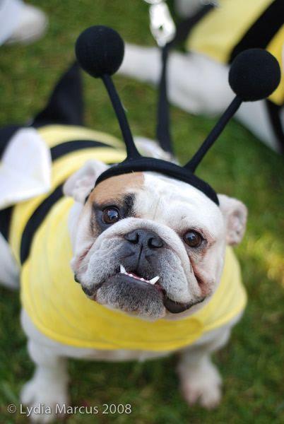 Bee Dog Costume.