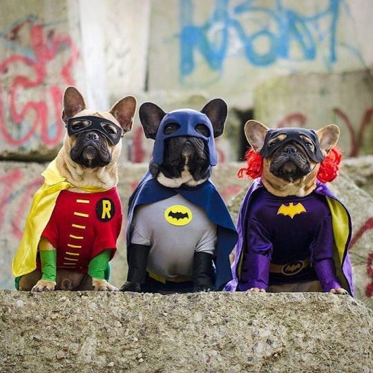 Well Guys looks like the City is Safe again....Good : batman costumes for dogs  - Germanpascual.Com