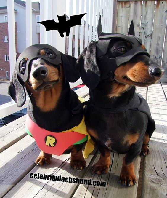 Batman and Robin Dog Costume.