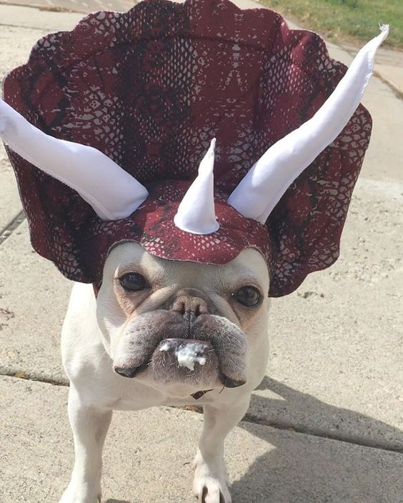Triceratops Dog Costume.