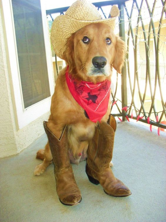 dog cowboy costume for halloween
