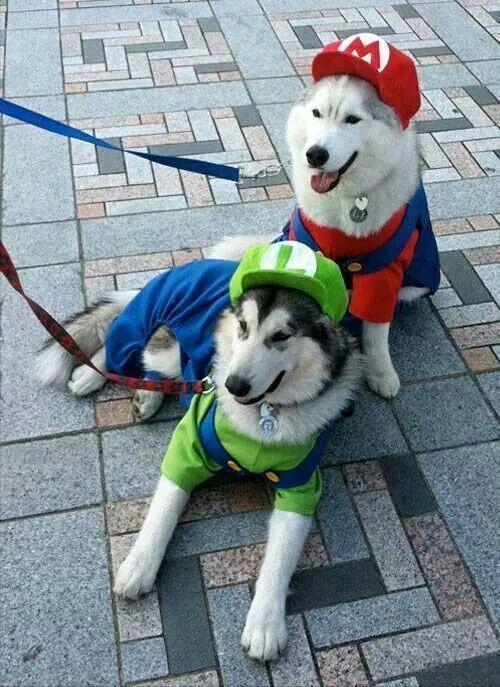 Super Mario Dog Costume.