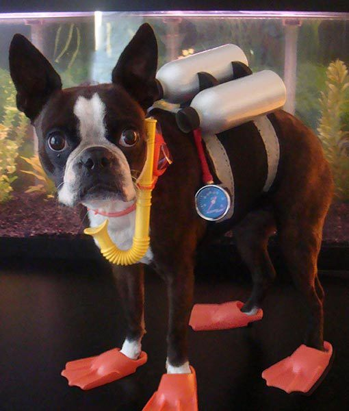 Scuba Diver Dog Costume for Halloween.