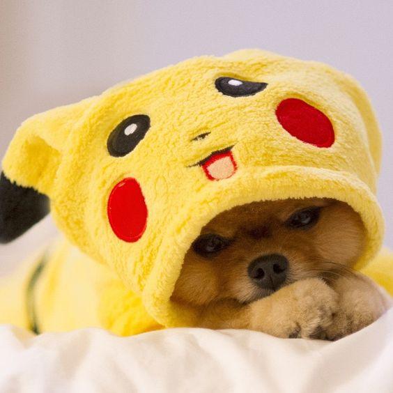 Pikachu Dog Costume.