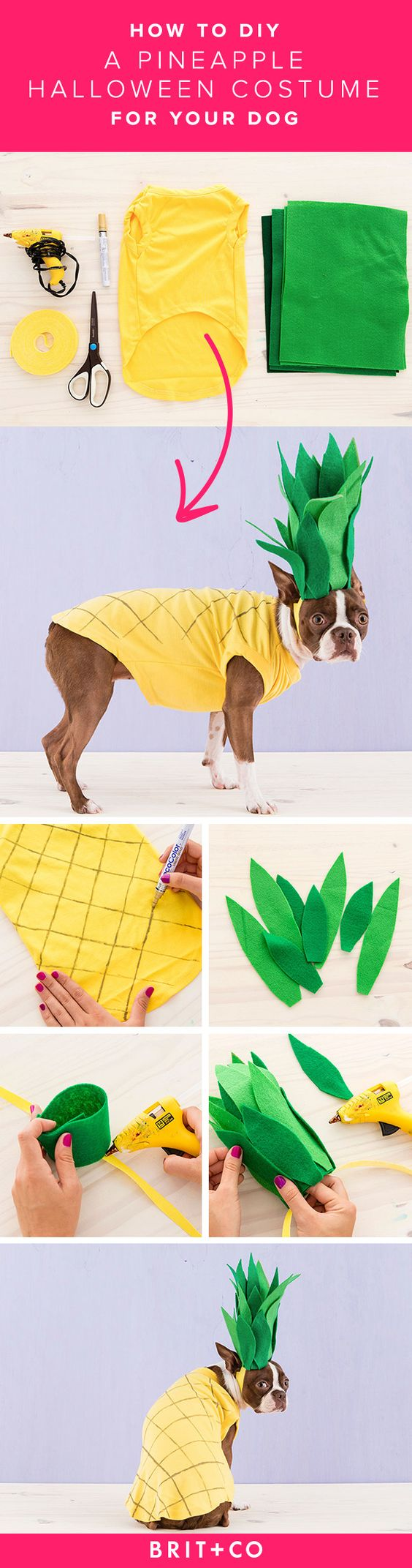 DIY Pineapple Dog Costume.
