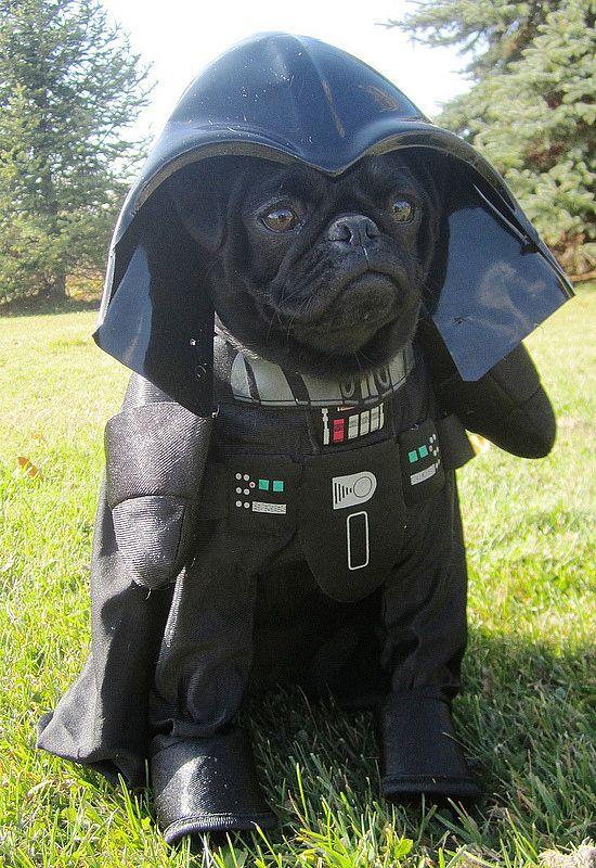 Dog Star Wars Darth Vader Costume.