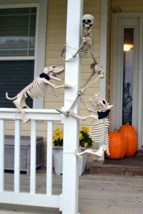 Halloween Funny Skeleton Dogs With Human Skeleton.