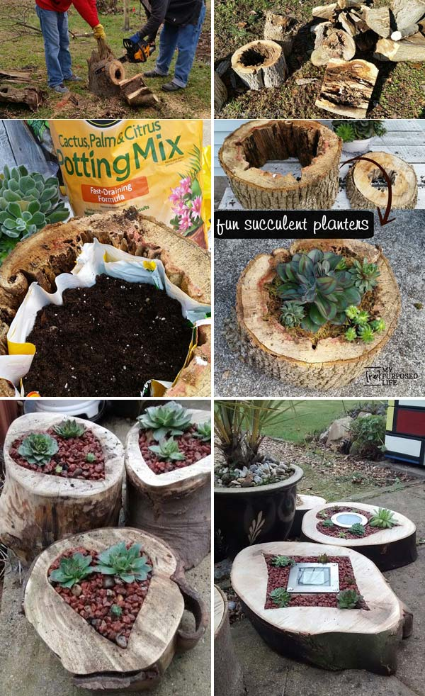 Succulent Planters Rotted Tree Trunk Pieces.