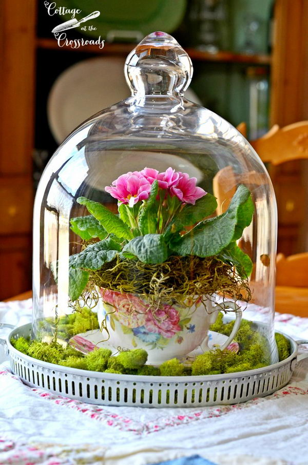 Spring under Glass.