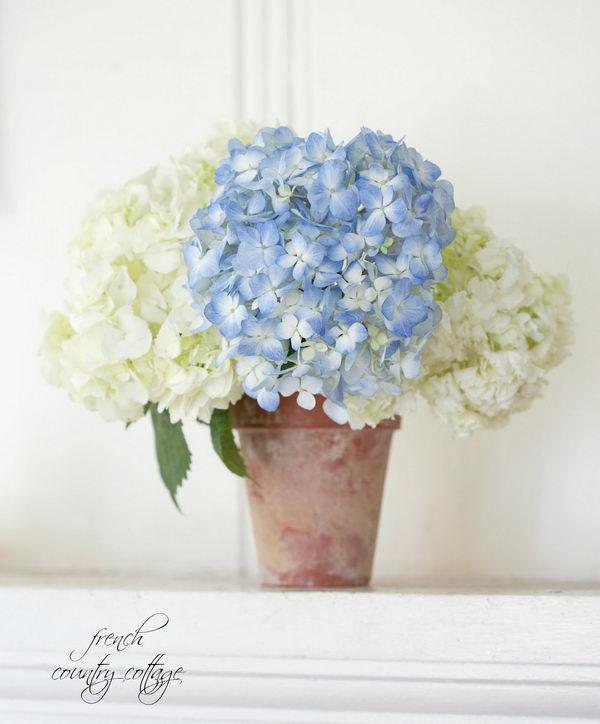 Hydrangeas In A Clay Pot Arrangement.